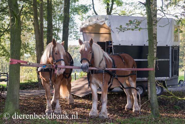 20141019-Dag-van-het-ploegpaard (13)