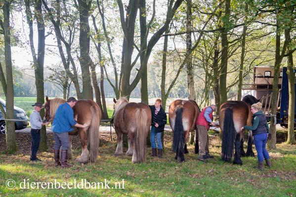 20141019-Dag-van-het-ploegpaard (3)