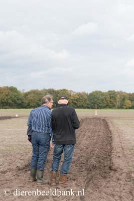 20141019-Dag-van-het-ploegpaard (8)